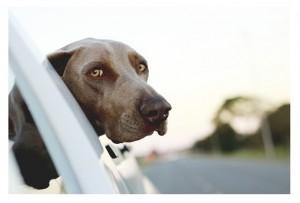 dog-446440_640-222